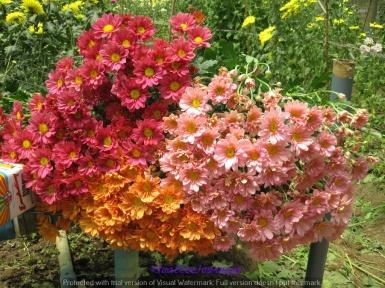 Flower Farm bouquets